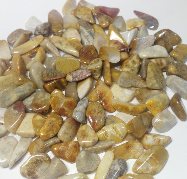 Коралит